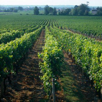 Grave Singalier Bordeaux Supérieur